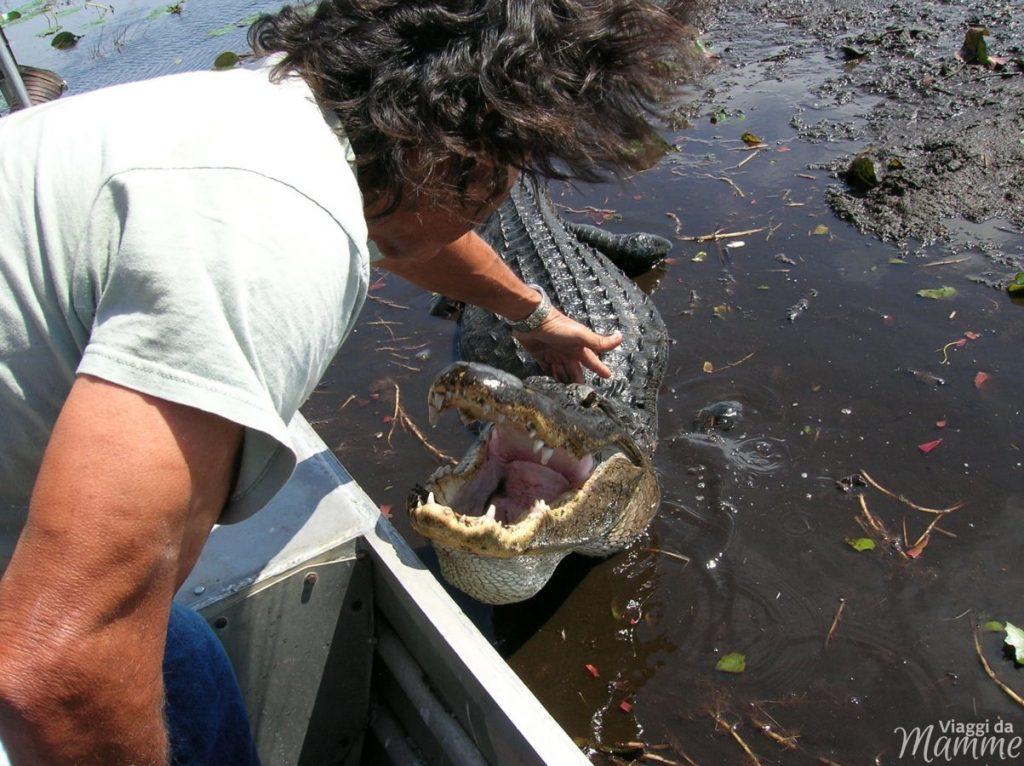 Florida con bambini: Miami e Key West più Disney World -Coccodrillo nelle Everglades-
