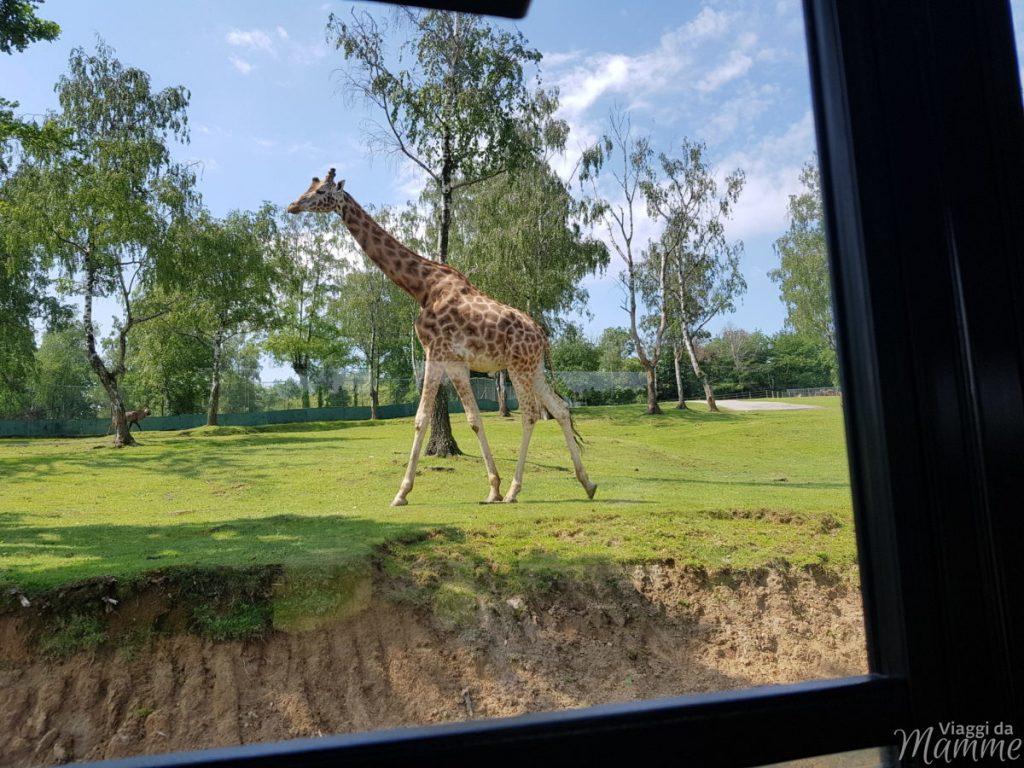 zoo di Pombia
