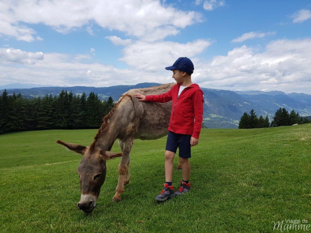 Malga Tuff: escursione sotto lo Sciliar con bambini -zoo di carezze alla Malga Tuff-
