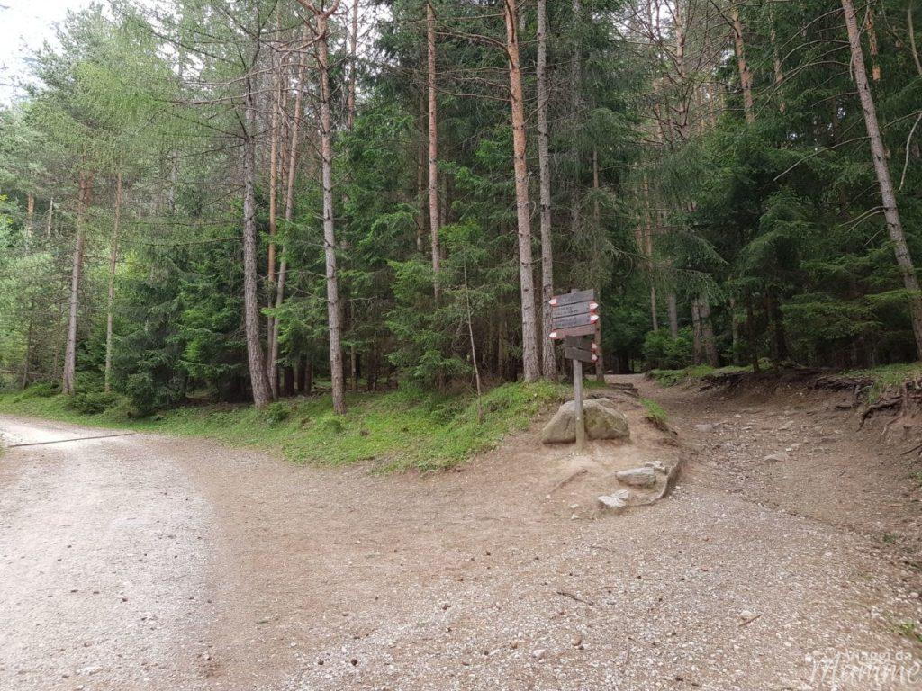 Malga Tuff: escursione sotto lo Sciliar con bambini -bivio strada forestale, sentiero nel bosco-