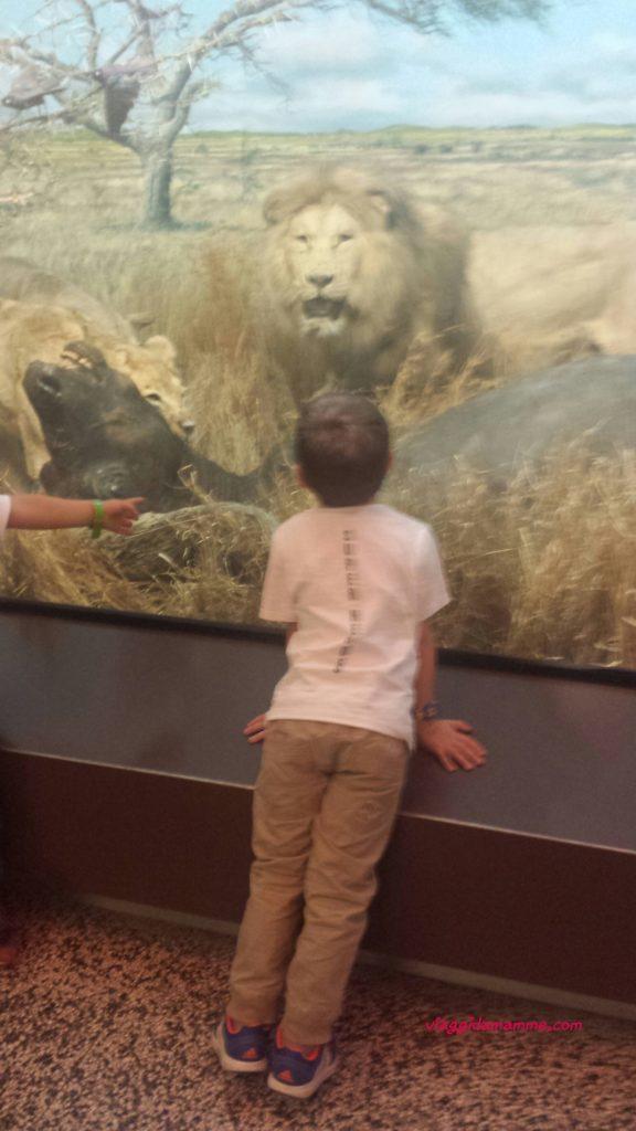 Una domenica al Museo Civico di Storia Naturale di Milano