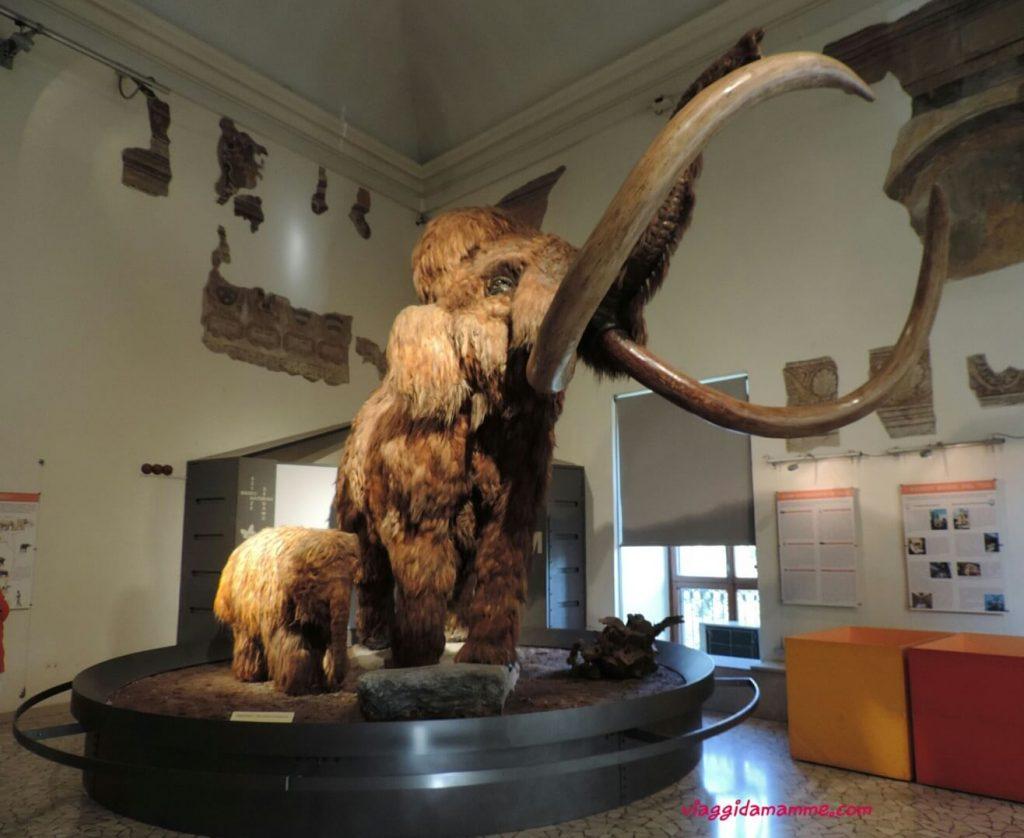 Bergamo con bambini Museo di Scienze Naturali Enrico Caffi Foto 1