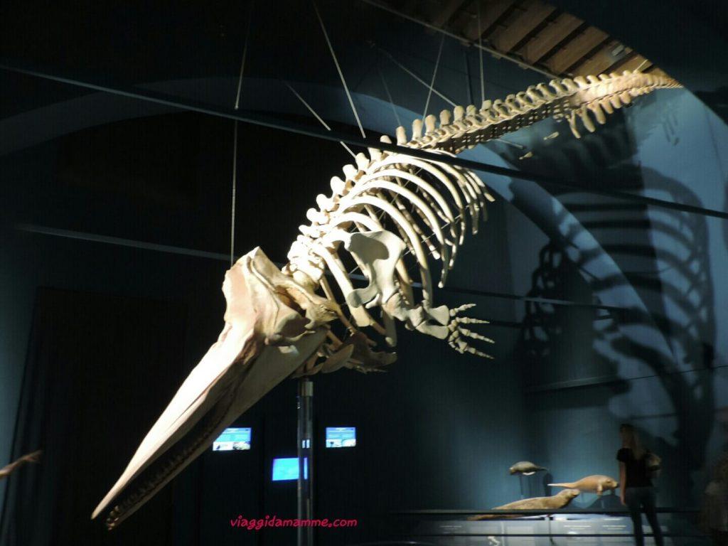 Bergamo con bambini Museo di Scienze Naturali Enrico Caffi Foto 5