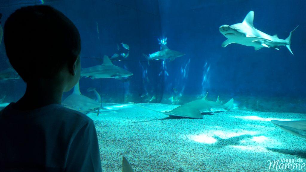 Visitare l'Acquario di Genova con i bambini -vasca degli squali-