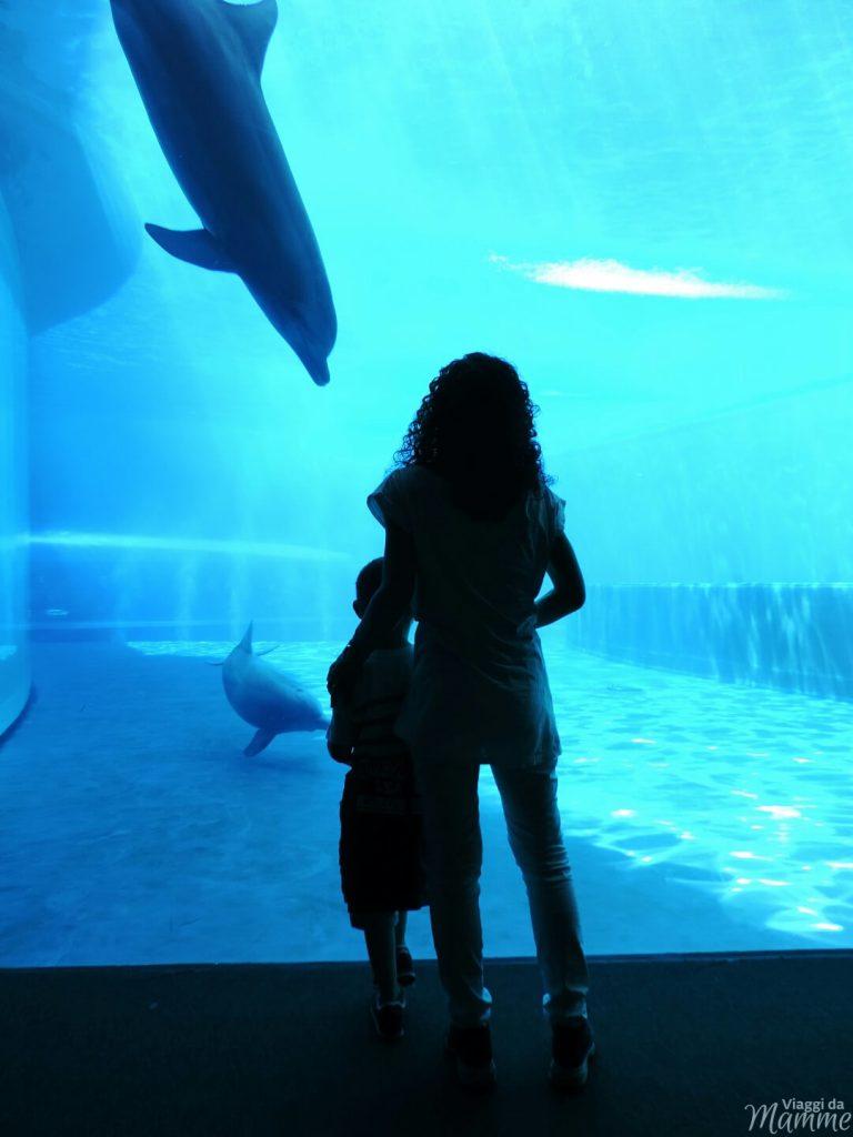 Visitare l'Acquario di Genova con i bambini -vasca delfini-