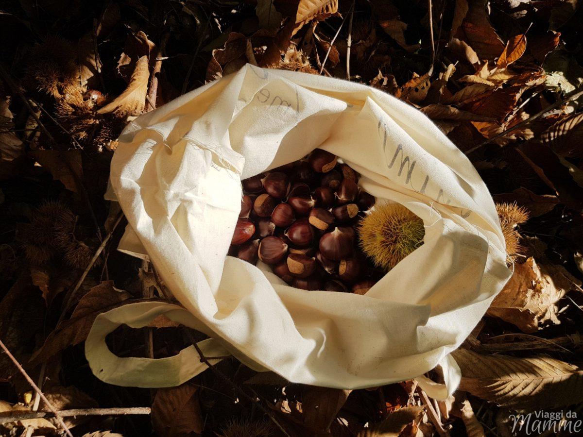 Andar per castagne in lombardia con bambini colle brianza for Raccogliere castagne