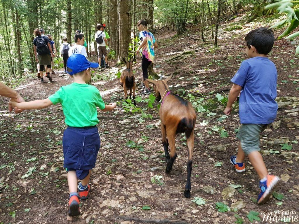 Alpe Cimbra estate in montagna con bambini a Folgaria -Maso Guez-