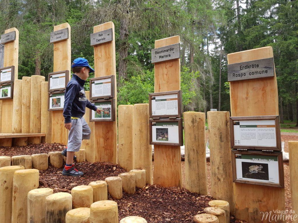 Alta Val Pusteria con bambini cosa fare e cosa vedere -Magico Mondo della Foresta-