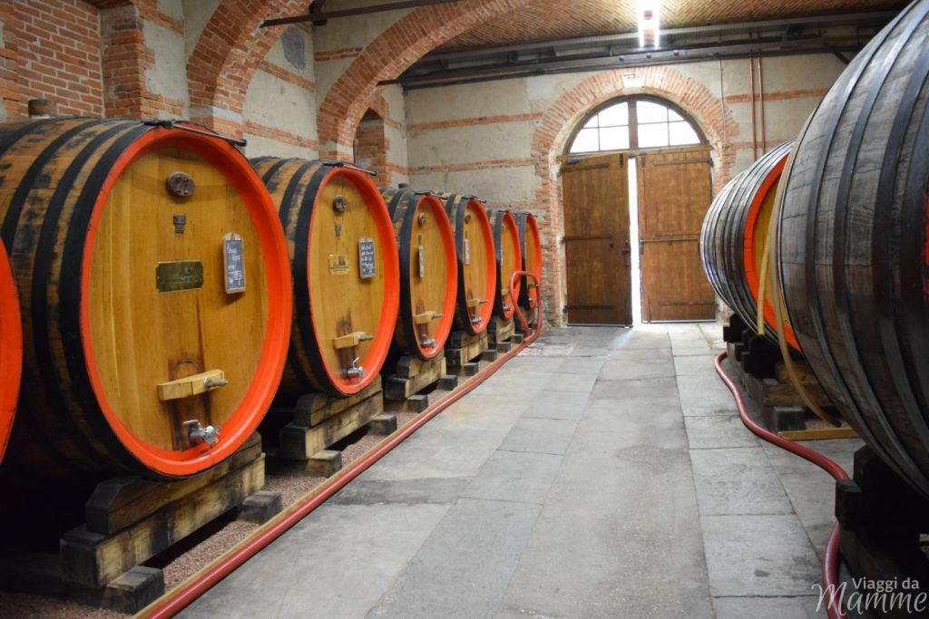 Museo del Vino a Barolo con bambini e tour delle cantine